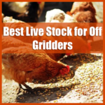Best Live Stock for Off Gridders