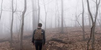 Survival tips if you get lost in the woods